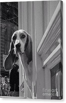 Pawspaws Dandy Beagle  Canvas Print by Opulent Creations