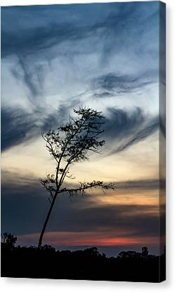 Peaceful  Canvas Print by Ramabhadran Thirupattur