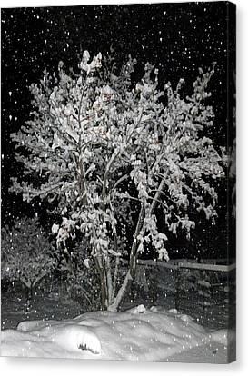 Peaceful Snowfall Canvas Print by Will Borden