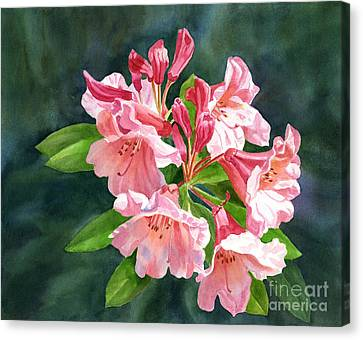 Peach Colored Rhododendron Flowers Dark Background Canvas Print by Sharon Freeman