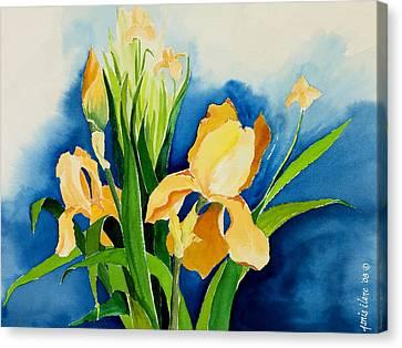 Peach Irises Canvas Print by Janis Grau