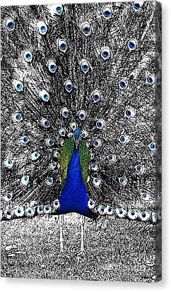 Peacock Plumage Color Splash Selective Color Stamp Digital Art Canvas Print by Shawn O'Brien