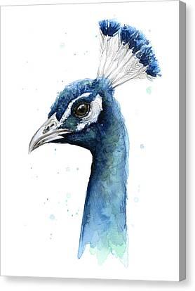 Peacock Watercolor Canvas Print by Olga Shvartsur