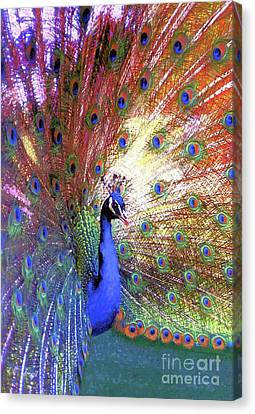 Peacock Wonder, Colorful Art Canvas Print by Jane Small