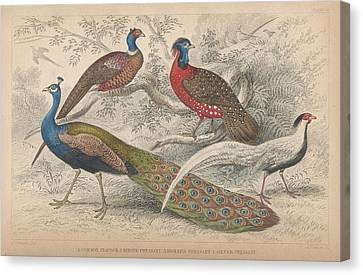 Peacocks Canvas Print by Oliver Goldsmith