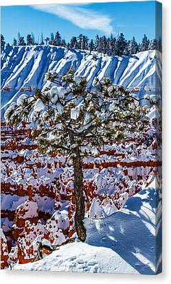 Peak Of Winter Canvas Print by James Marvin Phelps