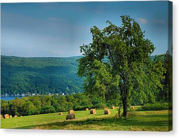 Pear Tree And Hayfield Canvas Print by Steven Ainsworth