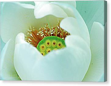 Peekaboo  Canvas Print by Don Wright