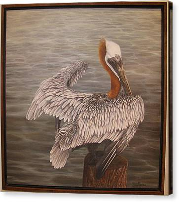 Pelican 3 Brown Canvas Print by Judy Merrell