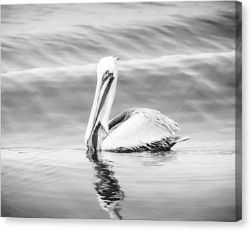 Pelican Adrift Canvas Print by Michael McStamp