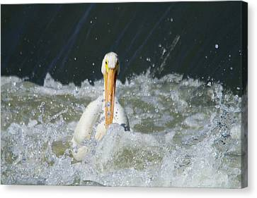 Pelican In Rough Water Canvas Print by Jeff Swan