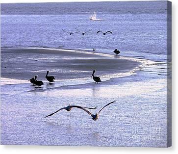 Pelican Island Canvas Print by Al Powell Photography USA
