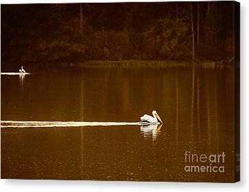 Pelican Landing Canvas Print by Tamyra Ayles