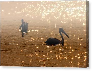 Pelican Sunrise Canvas Print by Mike  Dawson
