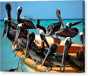 Pelicans On A Boat Canvas Print by Bibi Romer