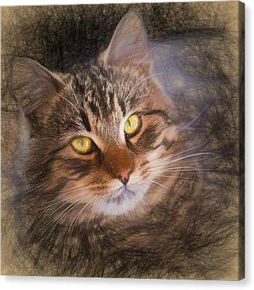 Pencil Sketch With The Image Of A Tabby Cat Canvas Print by Lubos Chlubny
