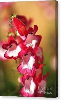 Penstemon Flowers In Bloom Canvas Print by Joy Watson