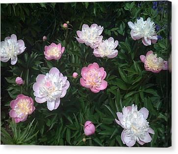 Peonies A La Monet Canvas Print by Martin Yaffee