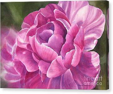 Peony Tulip Canvas Print by Sharon Freeman