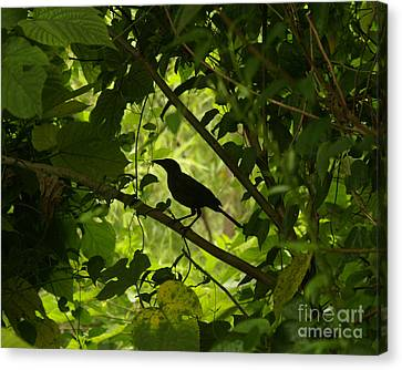 Perched In Green  Canvas Print by Jack Norton