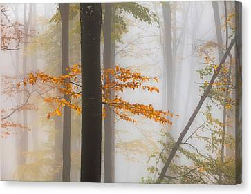 Perfect Forest Canvas Print by Evgeni Dinev