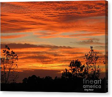Perfection Canvas Print by Greg Patzer