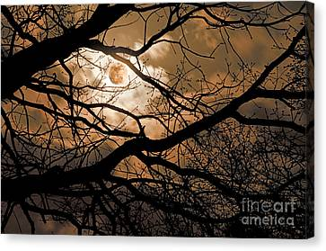 Perigee Moon In The Trees Canvas Print by Tamyra Ayles