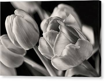 Petal Essence Canvas Print by Don Spenner