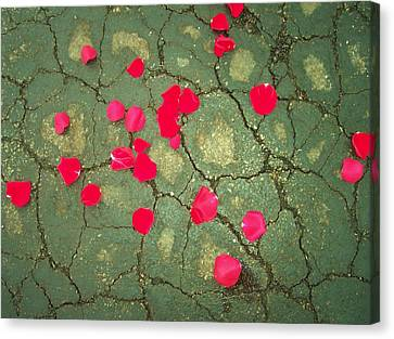 Petals On Asphalt Canvas Print by Anna Villarreal Garbis