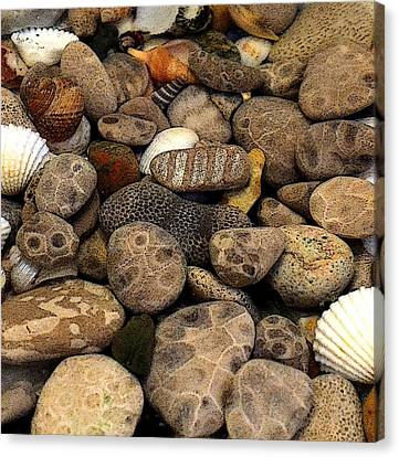 Petoskey Stones With Shells L Canvas Print by Michelle Calkins