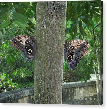 Photography Of Butterfly Symmetry Canvas Print by Mario  Perez