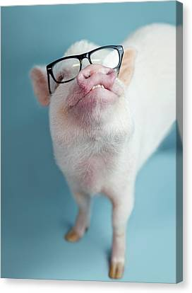 Pickle The Pig II Canvas Print by Eli Warren