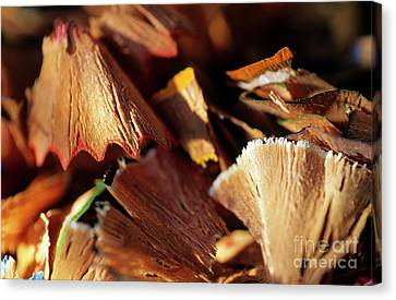 Pile Of Discarded Pencil Shavings Canvas Print by Sami Sarkis
