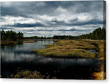 Pine Barrens Canvas Print by Louis Dallara