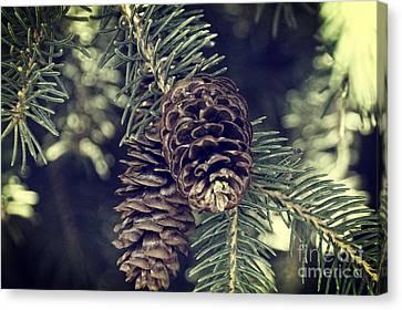 Pine Cone I Canvas Print by Gloria Pasko