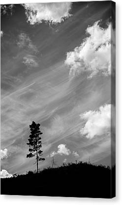 Pine Silhouettes Canvas Print by Toppart Sweden