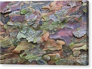 Pine Tree Bark Canvas Print by Tim Gainey