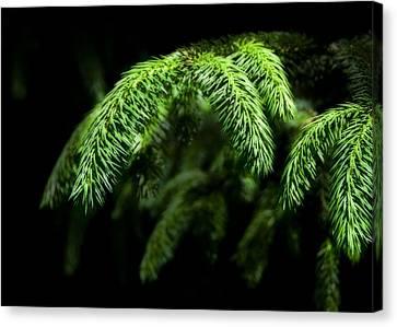 Pine Tree Brunch Canvas Print by Svetlana Sewell