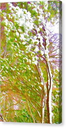 Pine Tree Covered With Snow Canvas Print by Lanjee Chee
