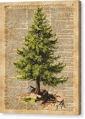 Pine Tree,cedar Tree,forest,nature Dictionary Art,christmas Tree Canvas Print by Jacob Kuch