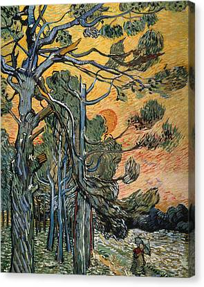 Pine Trees At Sunset Canvas Print by Vincent van Gogh