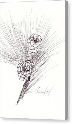 Pinecones Canvas Print by Barbara Cleveland