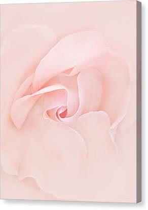Pink Abstract Rose Flower Canvas Print by Jennie Marie Schell