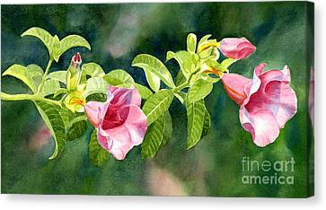 Pink Allamanda Blossoms With Background Canvas Print by Sharon Freeman