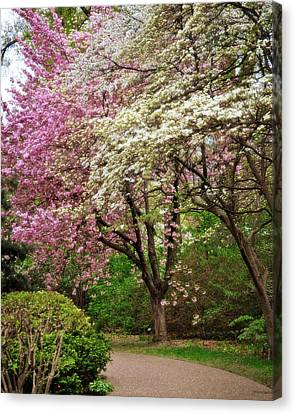 Pink And White Canvas Print by Marty Koch