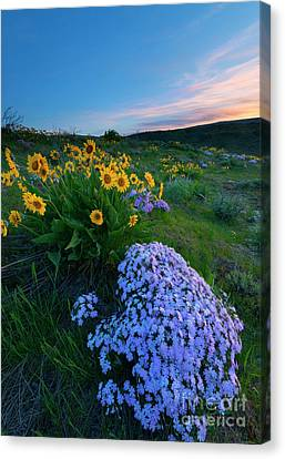 Pink And Yellow Sunset Canvas Print by Mike Dawson