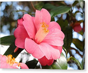 Pink Bright And Beautiful Canvas Print by Carol Groenen