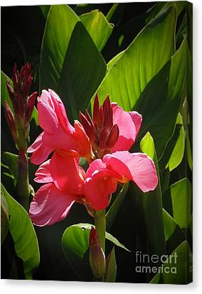 Pink Canna Lily Canvas Print by Trudee Hunter