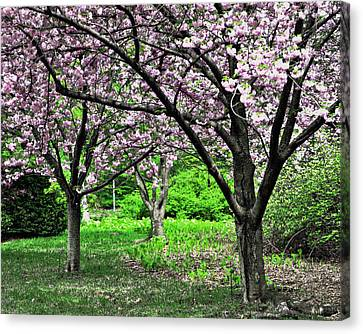Pink Dogwoods Canvas Print by Marty Koch