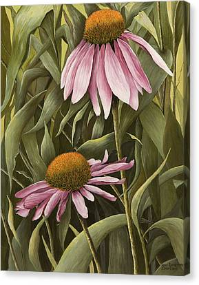 Pink Echinaceas Canvas Print by Mary Ann King